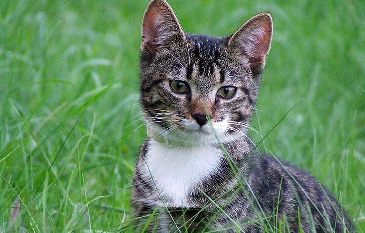 Выращивание травки для любимой кошки
